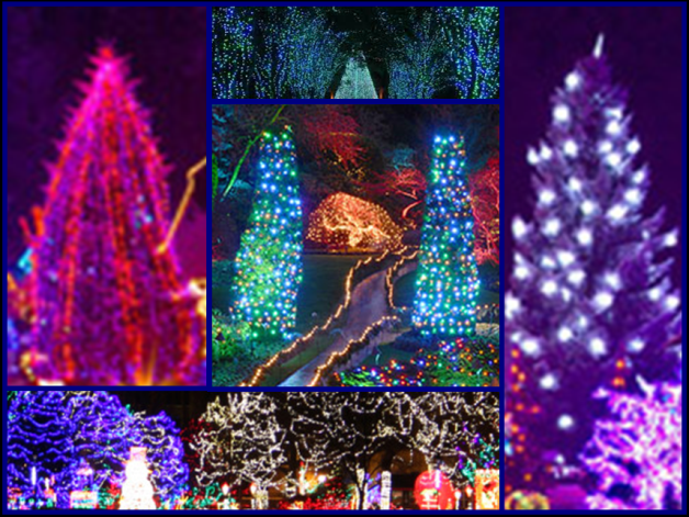 Boise Relocation Package Winter Garden Aglow