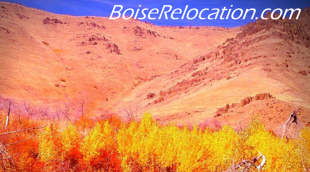 Move To Boise Hunting In Idaho